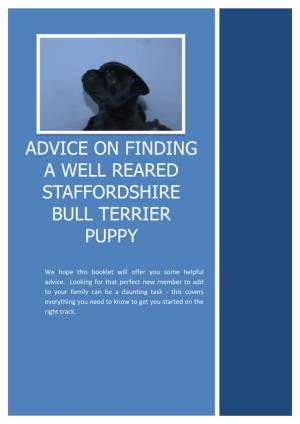 Advice on Finding a Well Reared Staffordshire Bull Terrier Puppy