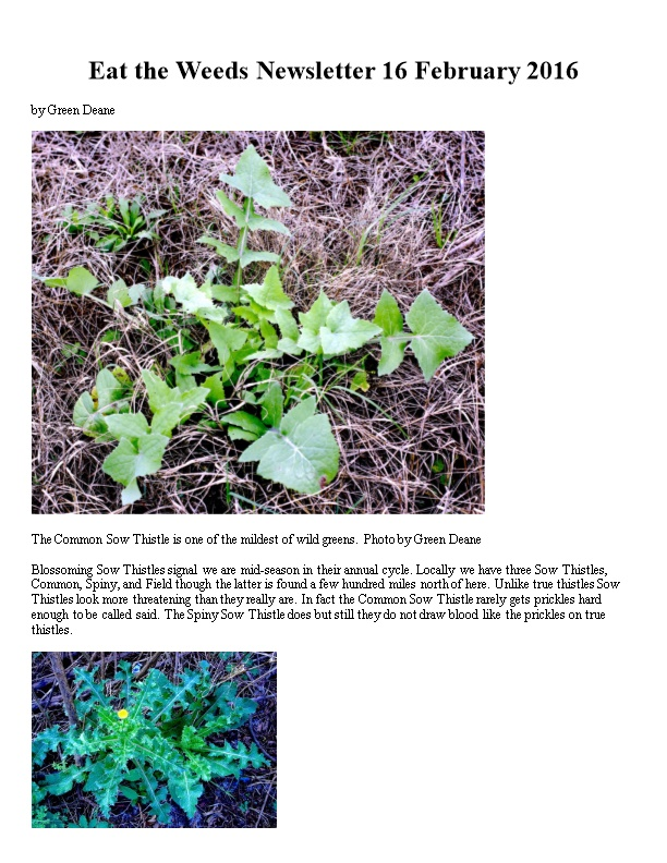 Eat the Weeds Newsletter 16 February 2016