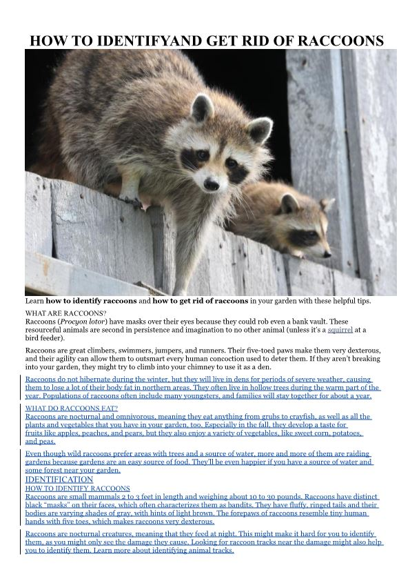 How to Identifyand Get Rid of Raccoons