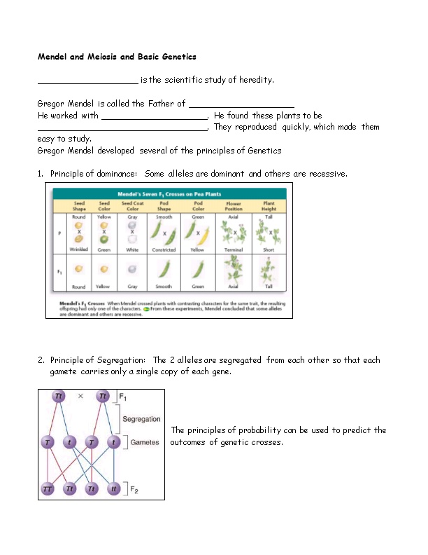 Mendel and Meiosis and Basic Genetics