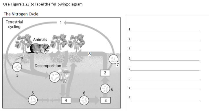 Snc1d Nutrient Cycle Worksheet Name ______ Docsbay 3rd Grade Water Cycle Worksheets Use Figure 1 22 To Label The Following Diagram